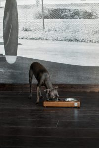 BowlAndBone-Republic-bowl-for-dog - luxury dog bowl