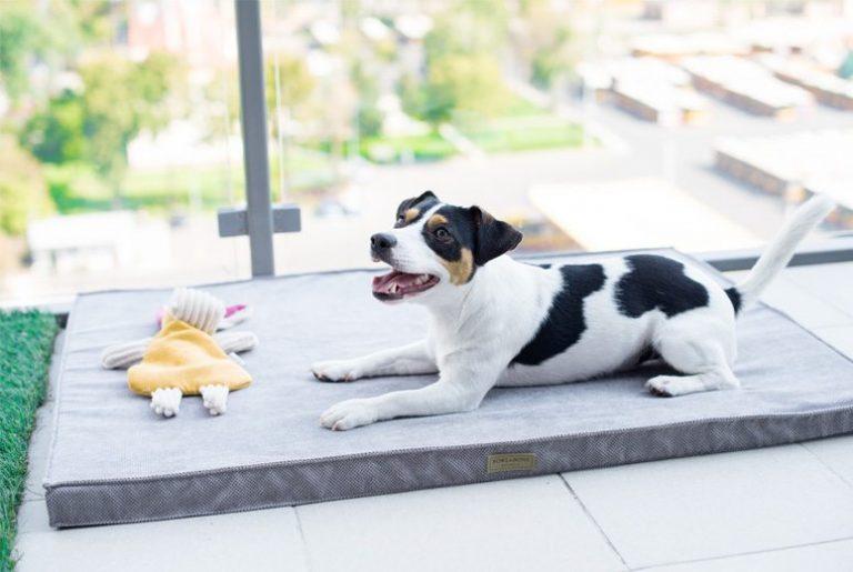BowlAndBone-Republic-toy-for-dog-BAX