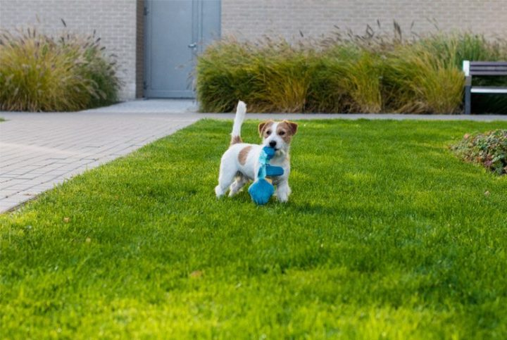 BowlAndBone-Republic-toy-for-dog-DONALD
