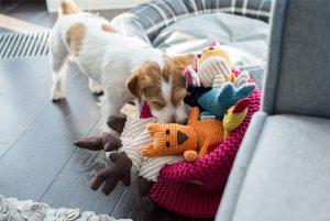 BowlAndBone-Republic-toy-for-dog-FELIX