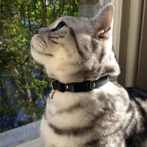 Cheshire+&+Wain- Beluga+luxury cat Collar