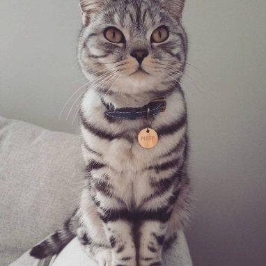 tempesti-leather-cat-collar-Cheshire-Wain-luxury-cat-COLLAR