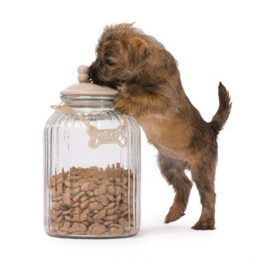 glass_treat_jar_with_dog_bone_plaque_in_mink_treat_jar_by_house_of_paws_2
