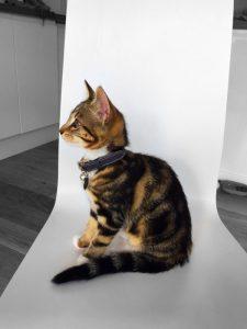 Cheshire+&+Wain luxury cat Collar