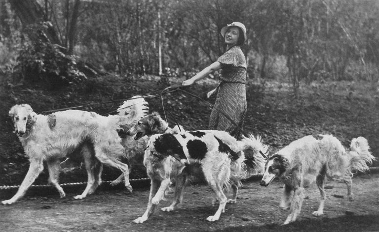 lady and dogs