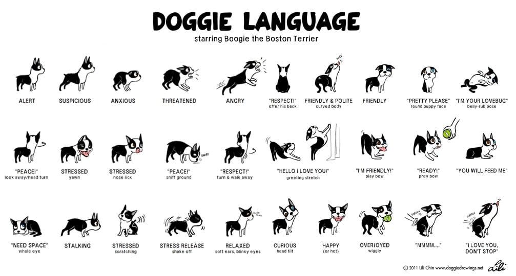Doggie Language 101 1