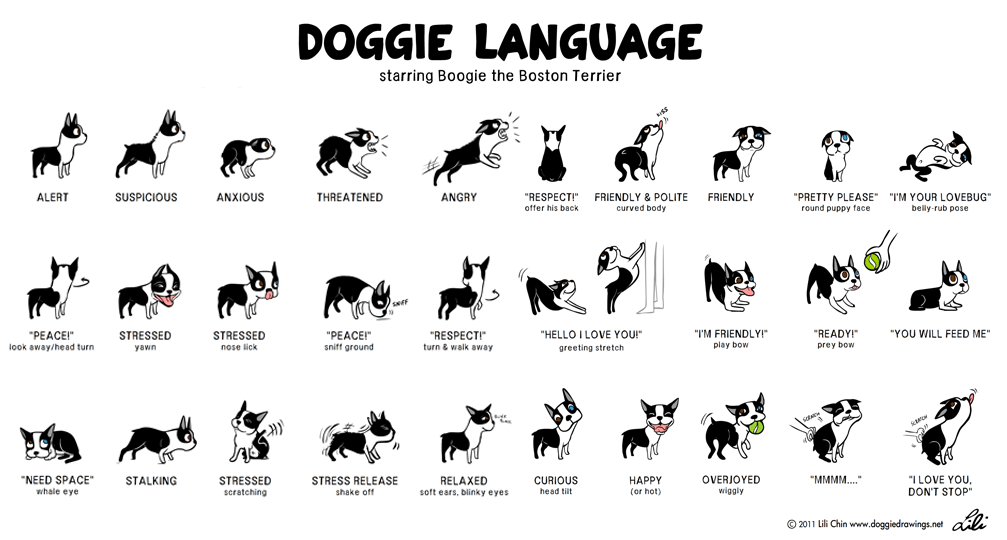 Doggie Language 101 Fletcher Of London Luxury Pet Products