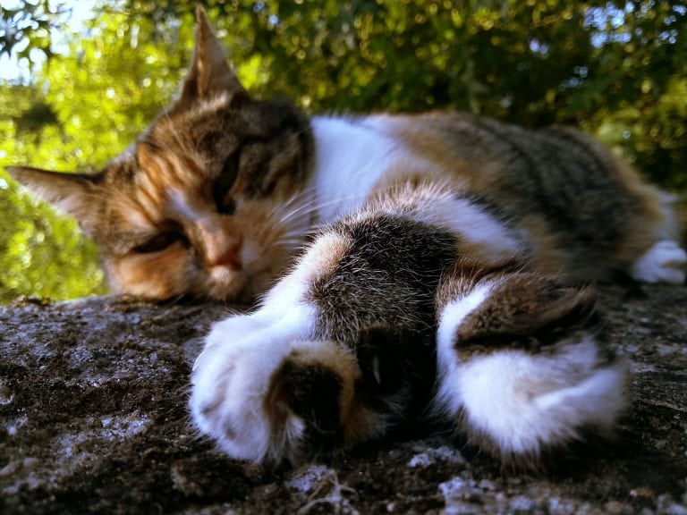 cat up tree