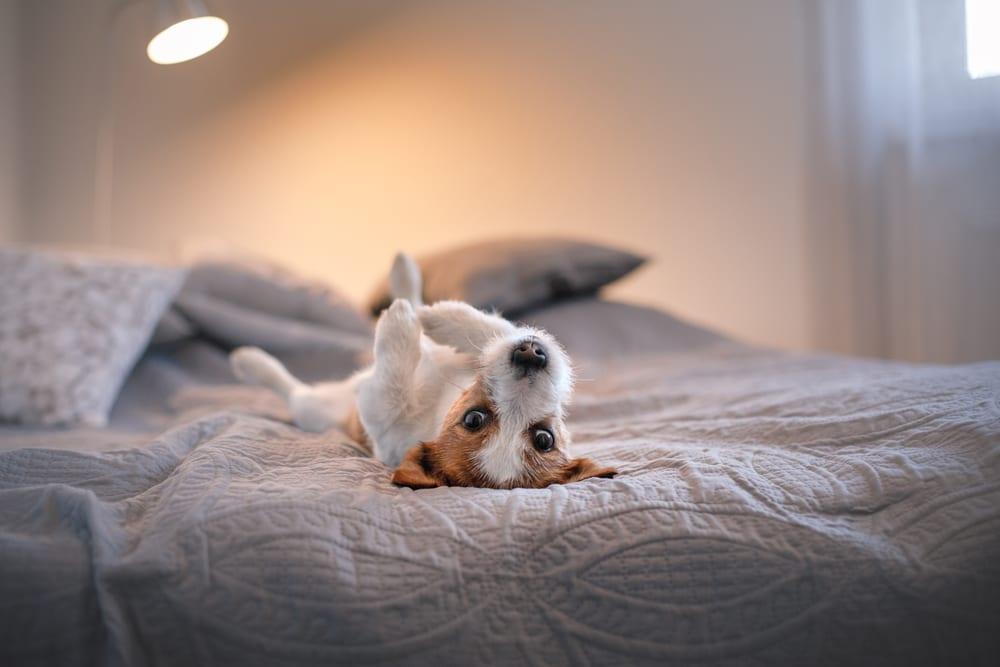 Dog & Puppy Massage 3