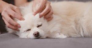 Dog & Puppy Massage 2