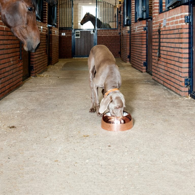 Capri-Bowl lord lou luxury dog bowl