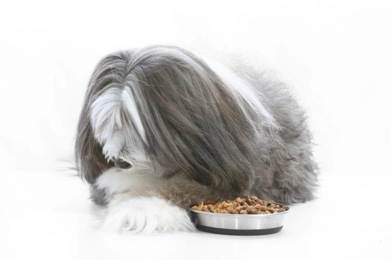 fussy eater dog