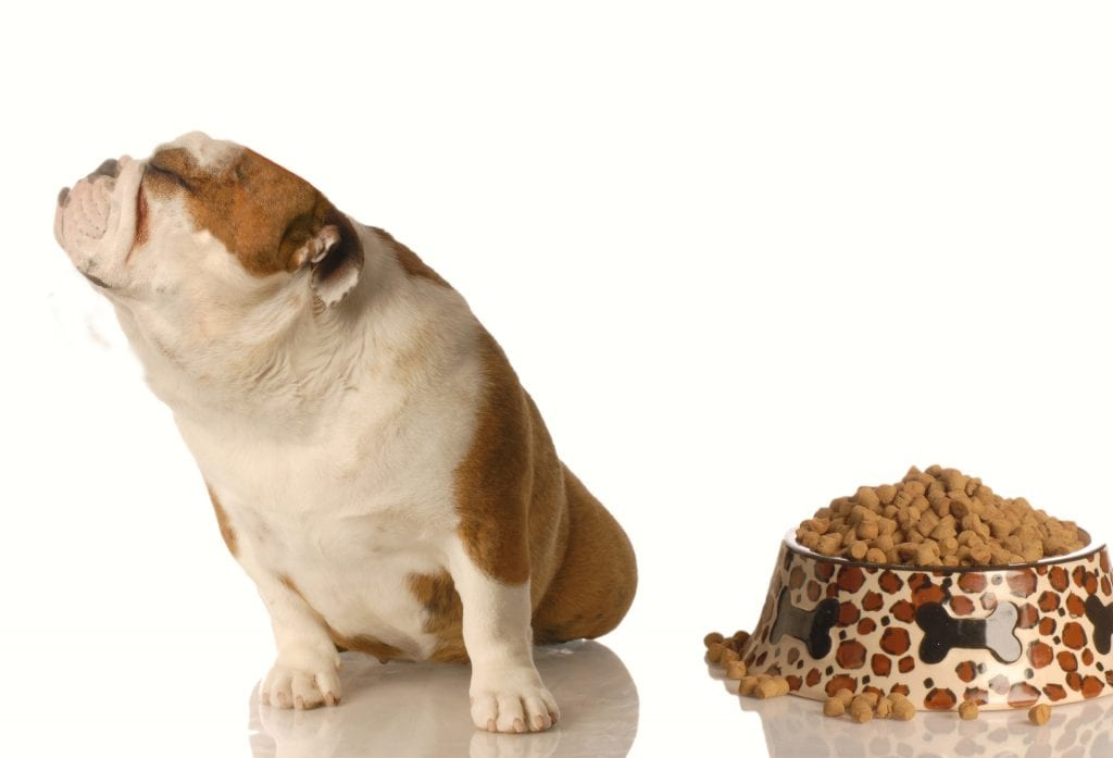Is Your Pet A Fussy Eater? 1