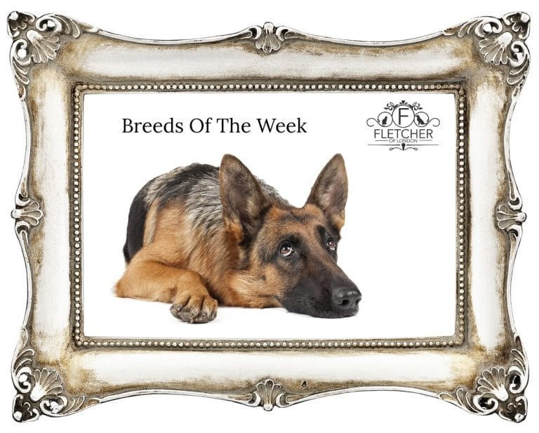 breeds of the week