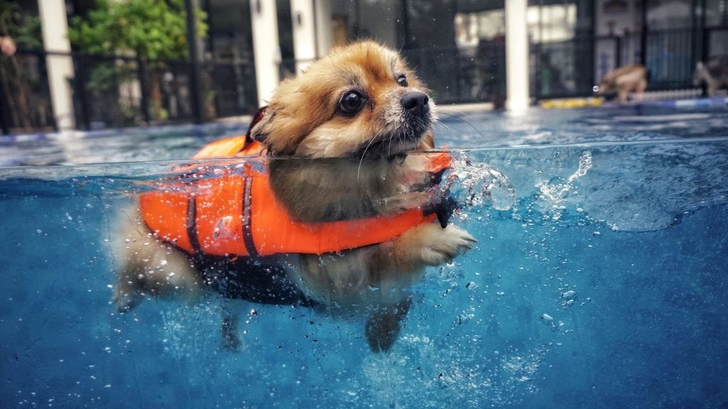 5 Water Safety Tips Every Dog Owner Should Know 1