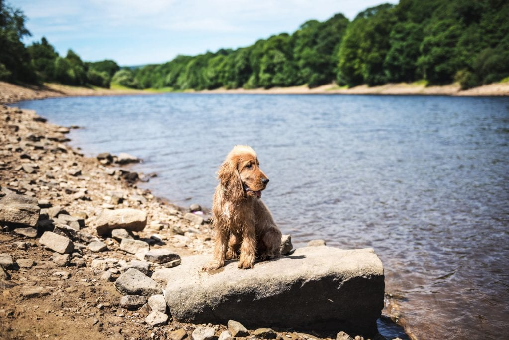 5 Water Safety Tips Every Dog Owner Should Know 2