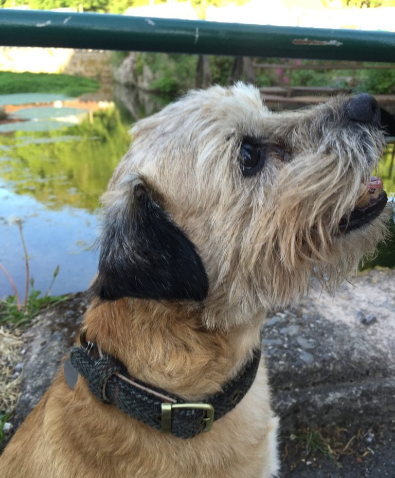 Tweedmill Dog Collar with Buckle Colour in Firth 12 Tweed 1